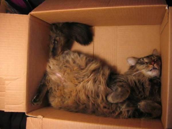 awkward cat nap